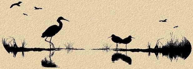 oiseaux14.jpg