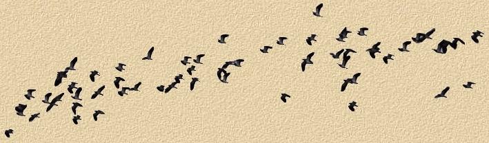 oiseaux18.jpg